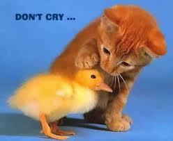 Berhenti Sedih, Kawan..